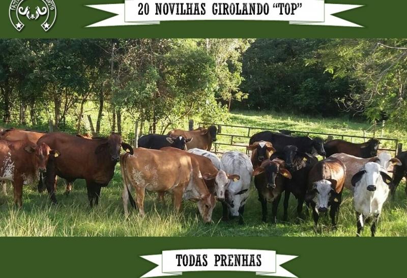 Árvore Genealógica de Mandura TE Monte Verde - ISPG 649