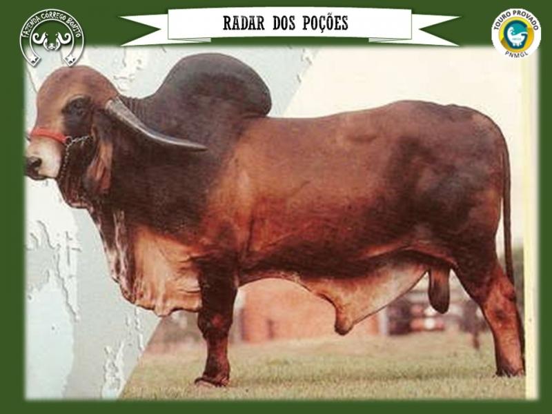 Balada FIV Badua - CSLM 10