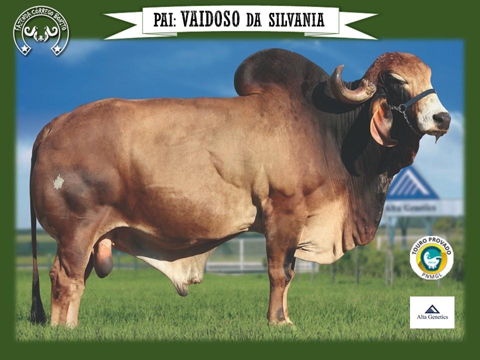 Alanna Guanabara - JCBT 42