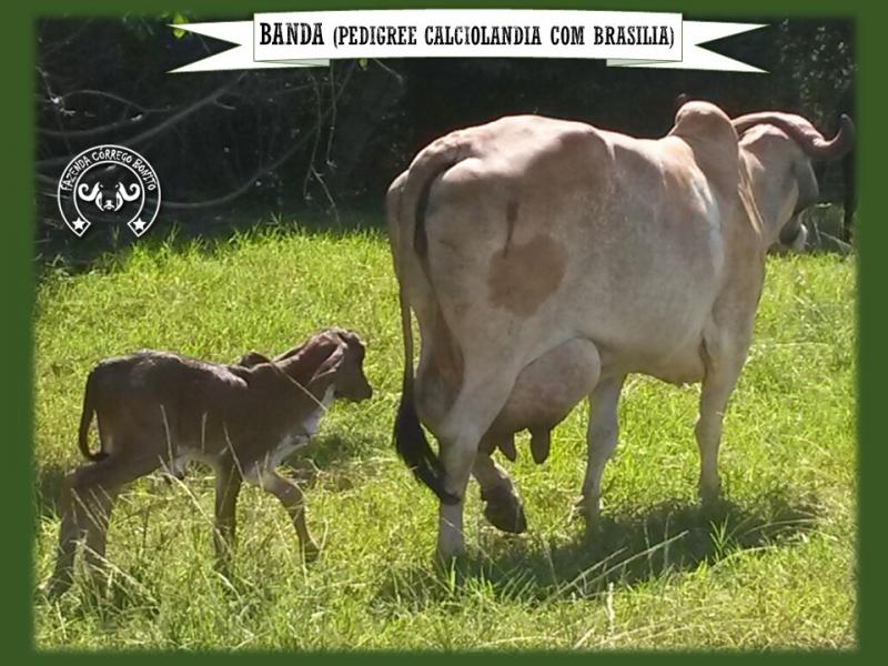 Banda FIV Badua - CSLM 4